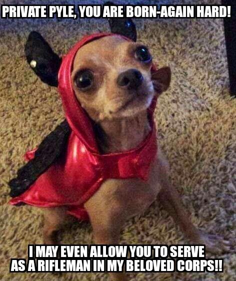 wpid devil dog jpg?w=474 devil dog meme pastiche stew